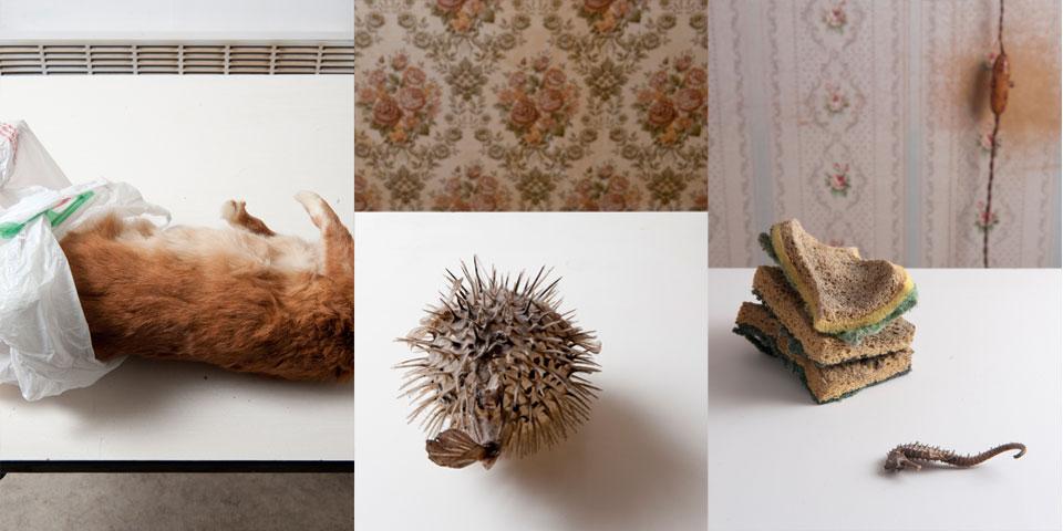 Faune domestique 2013-2014